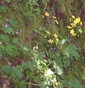 Wild flowers of the forest